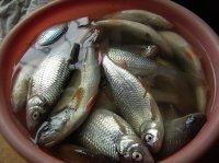 Рыбные отходы в огород