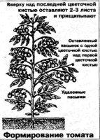 Способы формирования томата, перца и баклажана