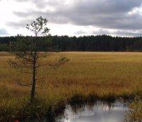 Торфяно-болотные почвы