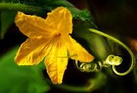 Биология растений
