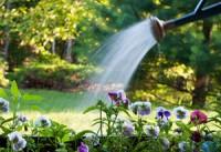 Как организовать сохранение влаги в почве? Кислотность почвы