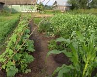 Культура огорода