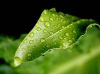 О фотосинтезе и дыхании растений