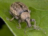Враги садовода – насекомые-вредители, грызуны, болезни